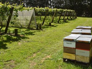 Contract Beekeeping 2