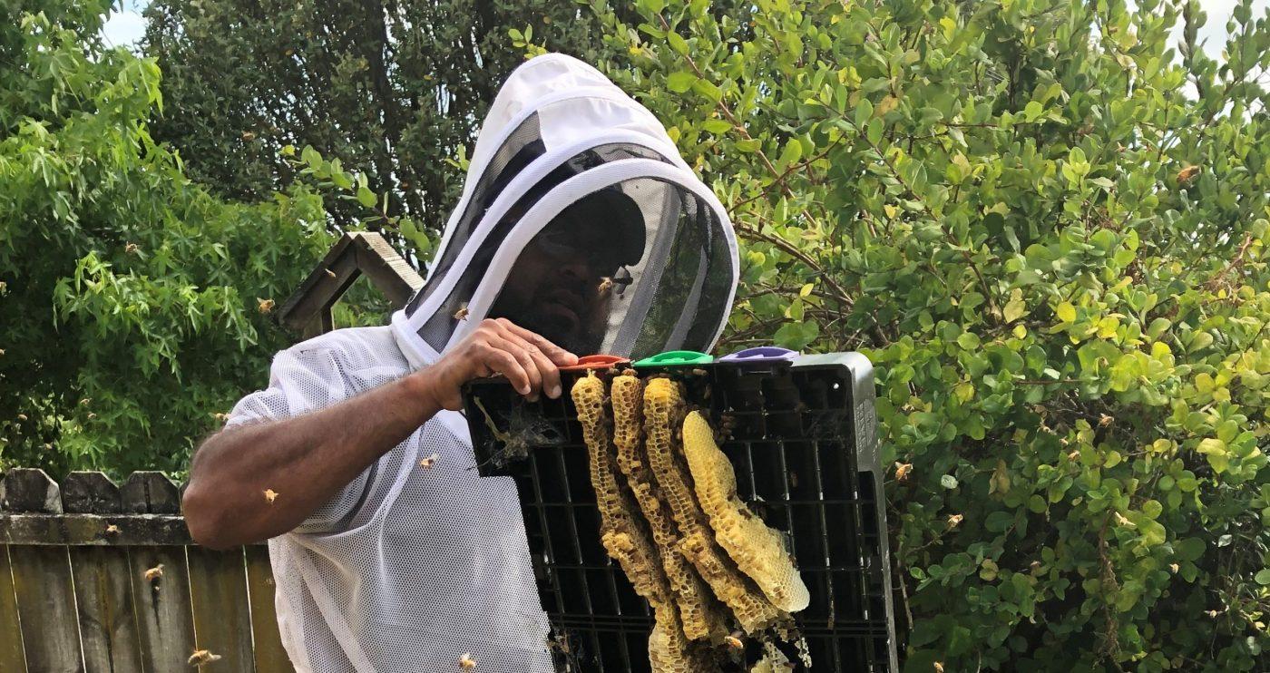 Rent a hive 1