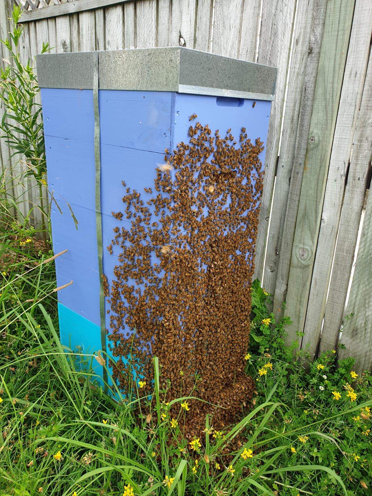 Bees and hives in Auckland