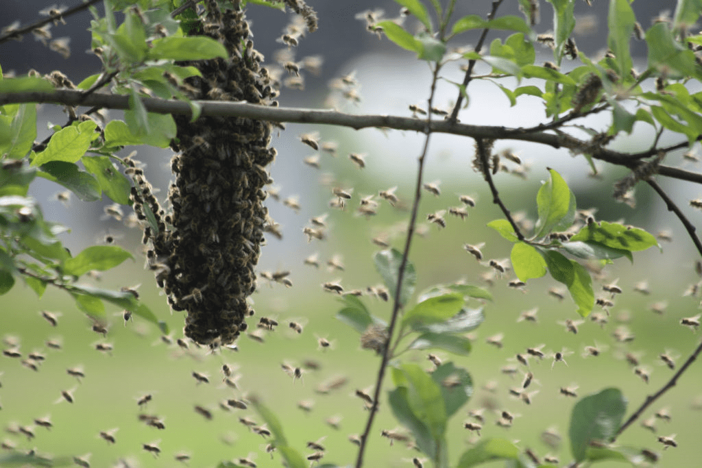 bee-swarm-collectors 1
