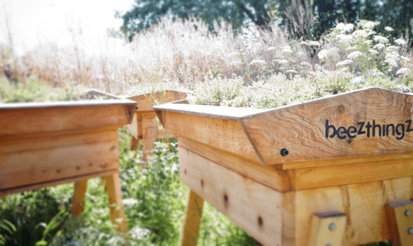 bees in park