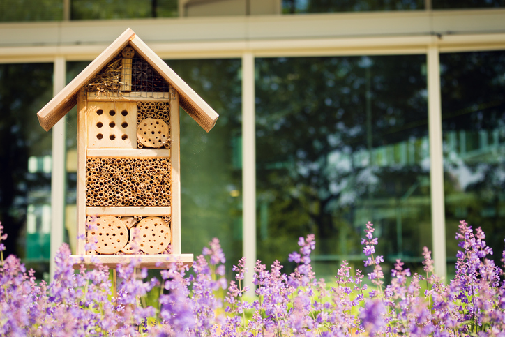How to Turn Your Backyard into A Private Wildlife Sanctuary 1